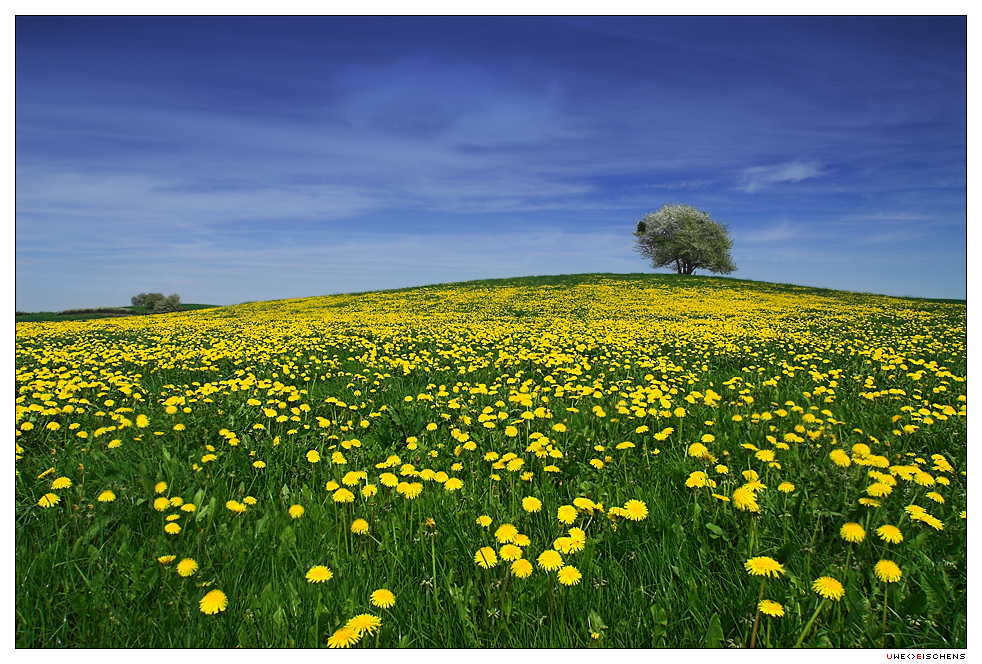 [Image: Dandelion_Hill_by_Crossie.jpg]